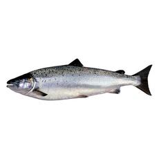 Лосось ~5-6 кг с/м с/г потр Productos del Mar Ventisqueros Чили